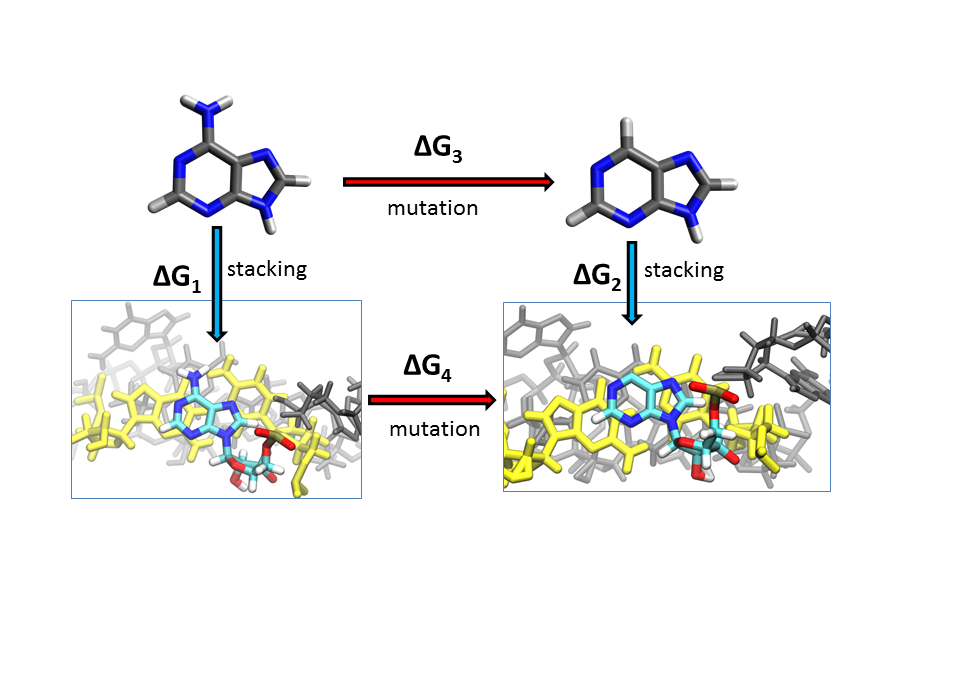 JACS: The essential role of stacking adenines in a two-base-pair RNA kissing complex